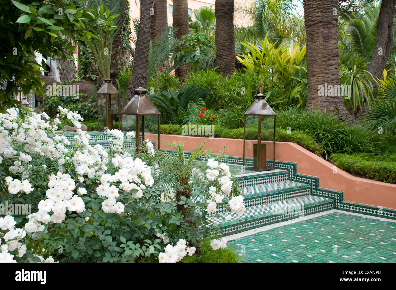 white roses and palm trees in the garden at la mamounia hotel in
