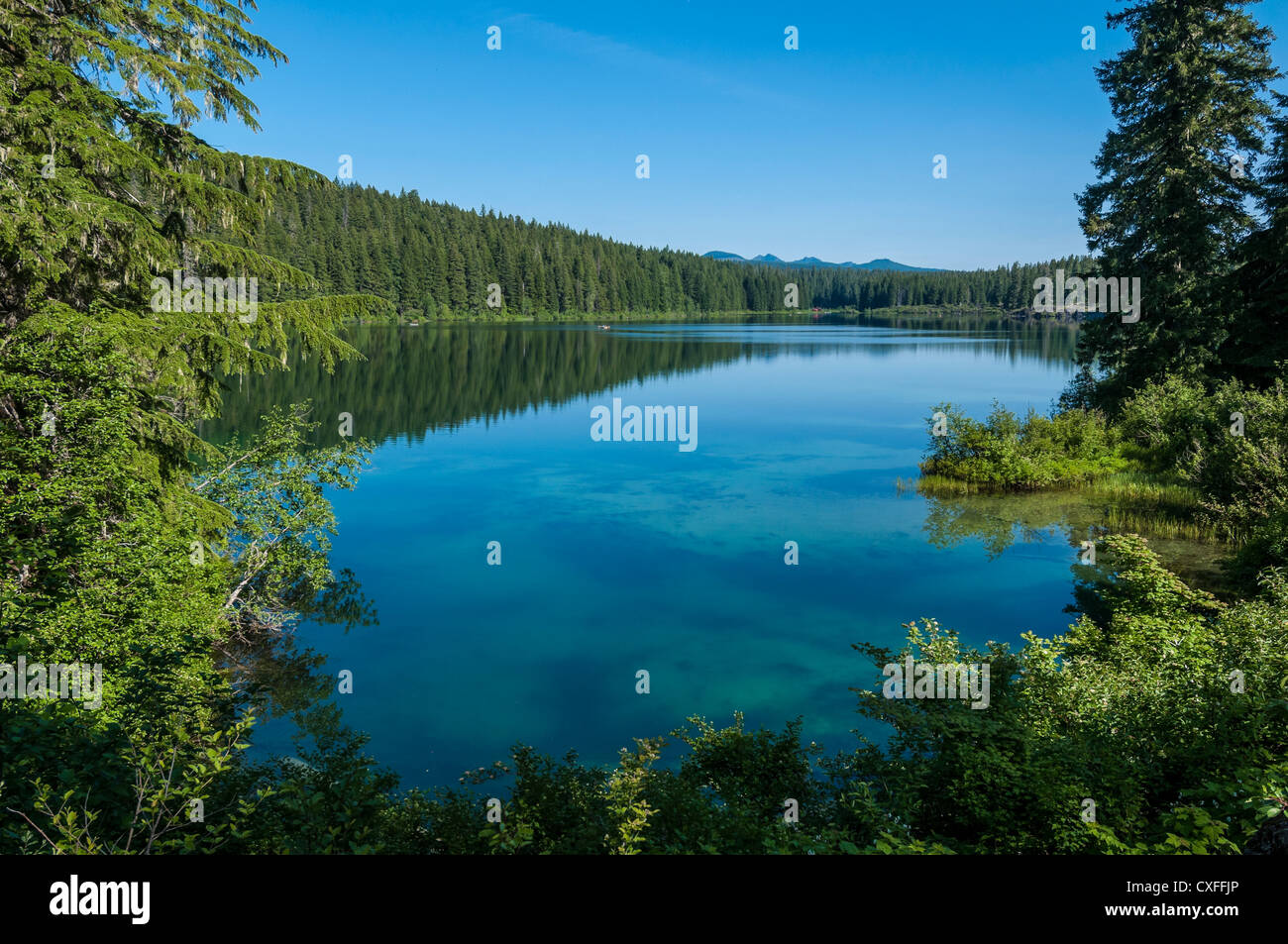 Clear lake willamette national forest oregon stock photo for Clear lake oregon fishing