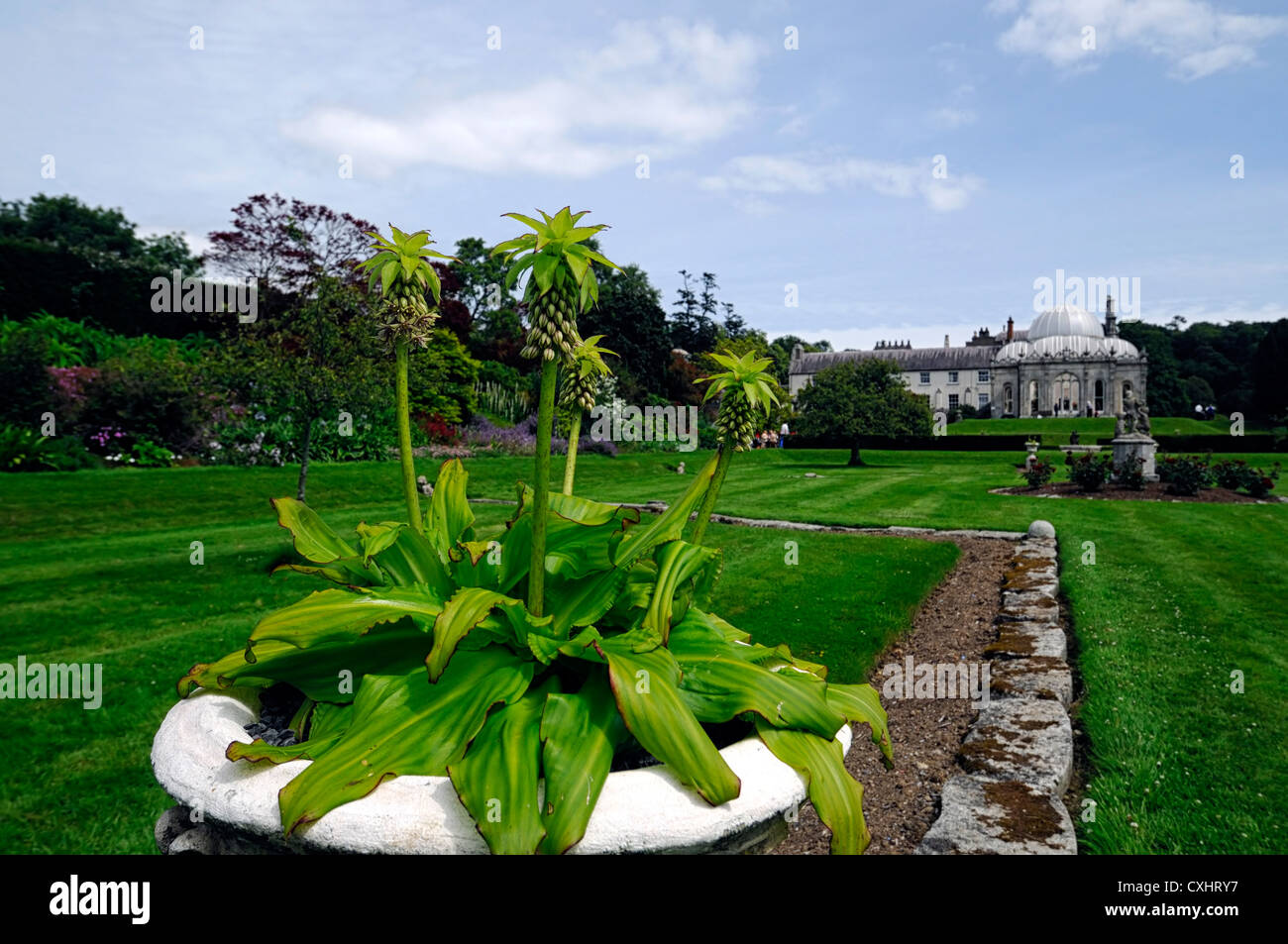 Stock Photo   Eucomis Bicolor Pineapple Lily Stone Urn Garden Gardening  Kilruddery House Bray Wicklow Irish Mansions And Gardens