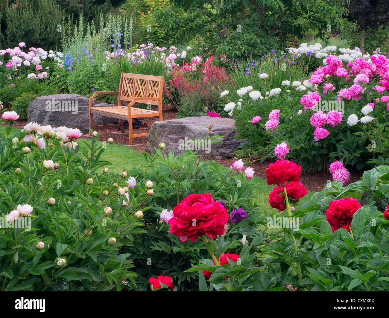Peony Garden And Bench Adleman Peony Garden Salem Oregon Stock Photo Royalty Free Image
