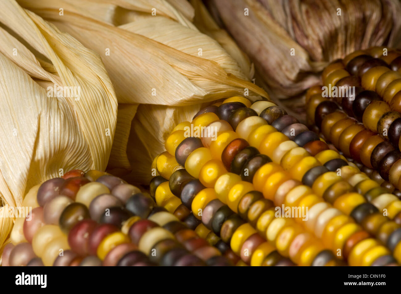Indian Corn Background Autumn Or Fall Decoration Items
