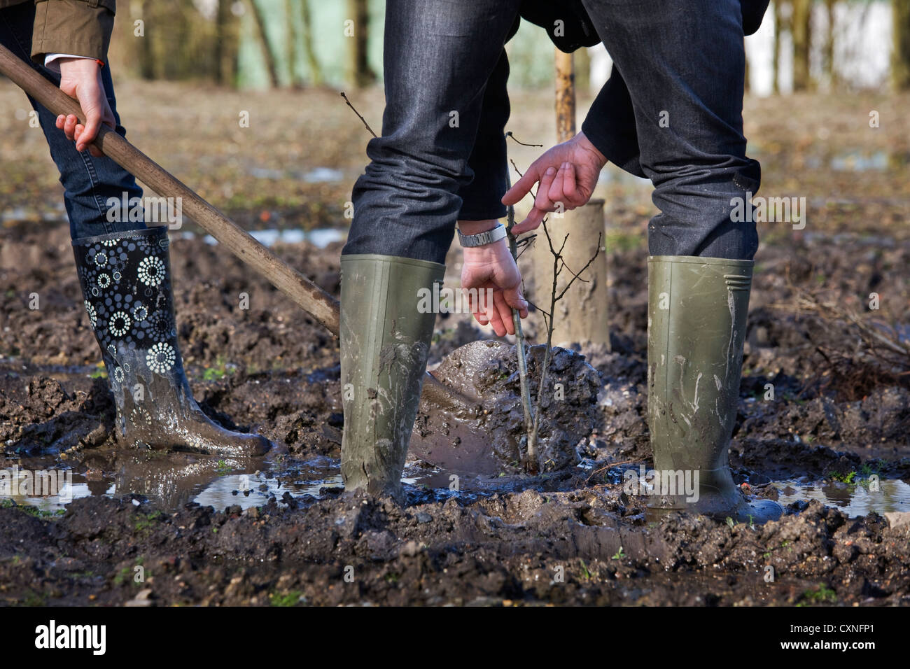Man Wearing Rubber Boots Wellies Planting Tree With