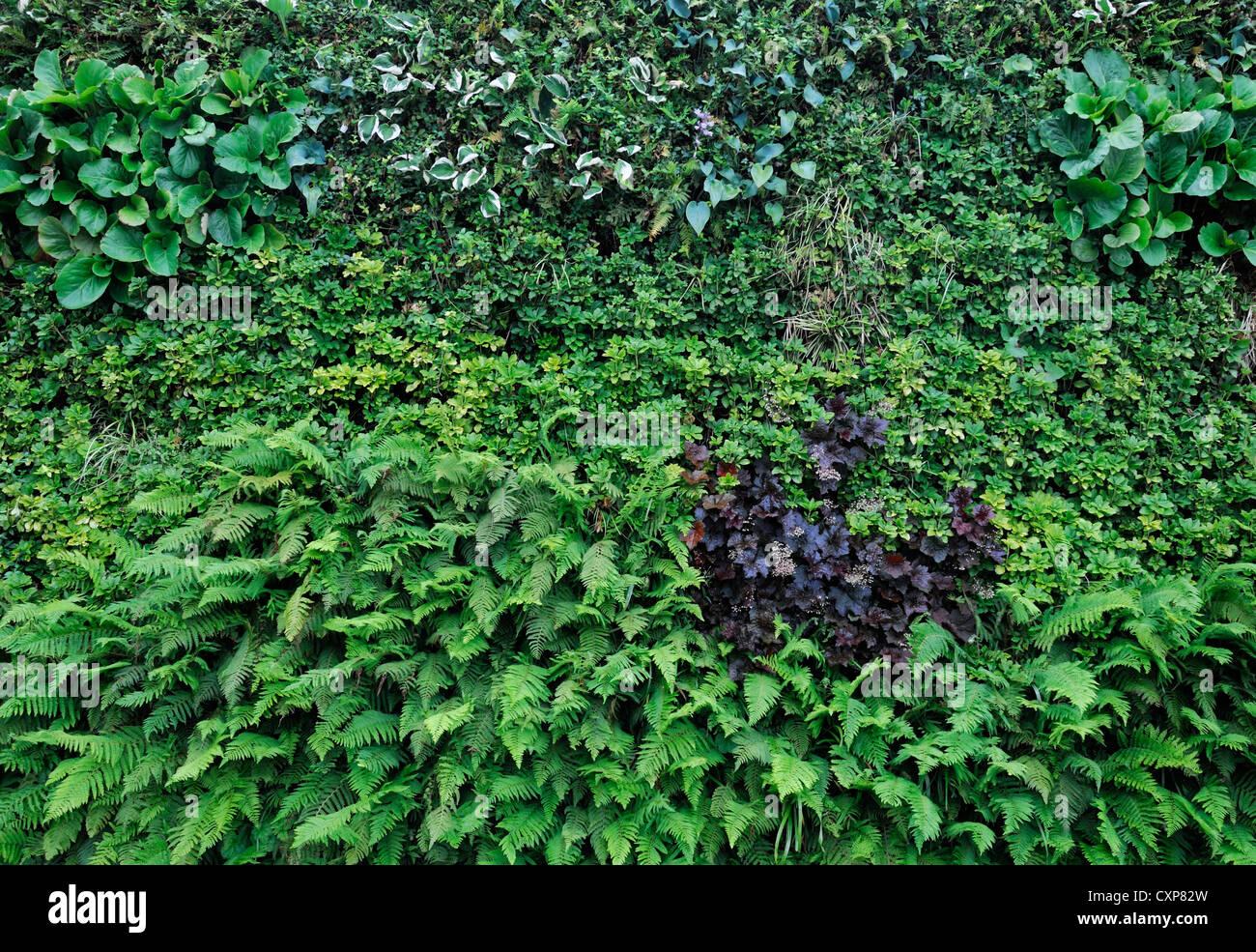 Living Green Wall Vertical Garden Gardening Urban Small Space Pachysandra  Terminalis Heuchera Hosta Bergenia Liriope