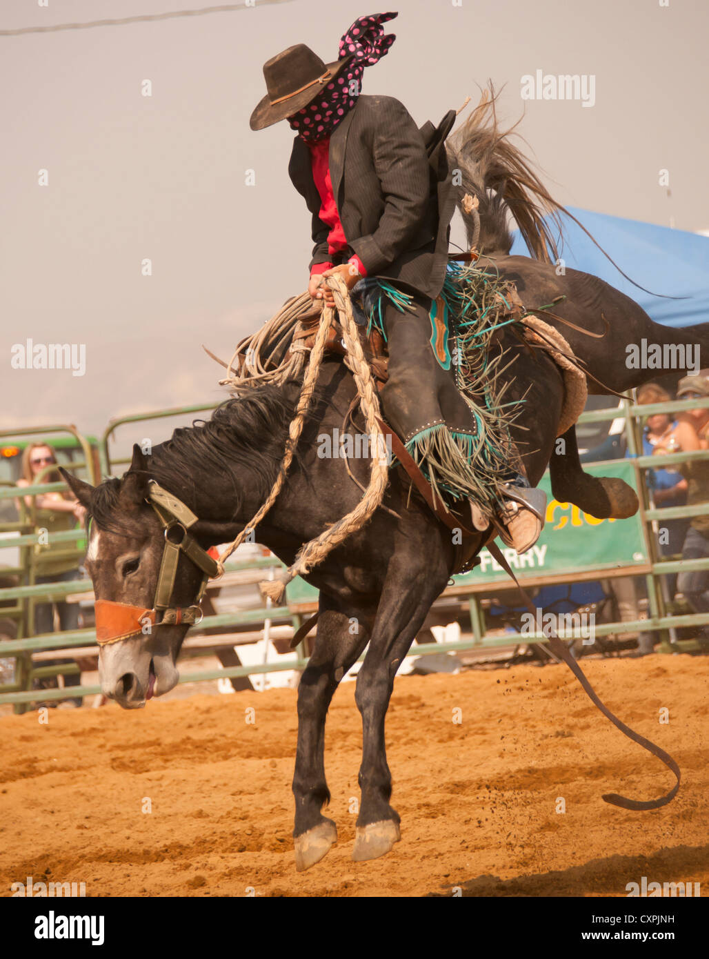 Cowboy Saddle Bronc Riding During The Rodeo Event Bruneau