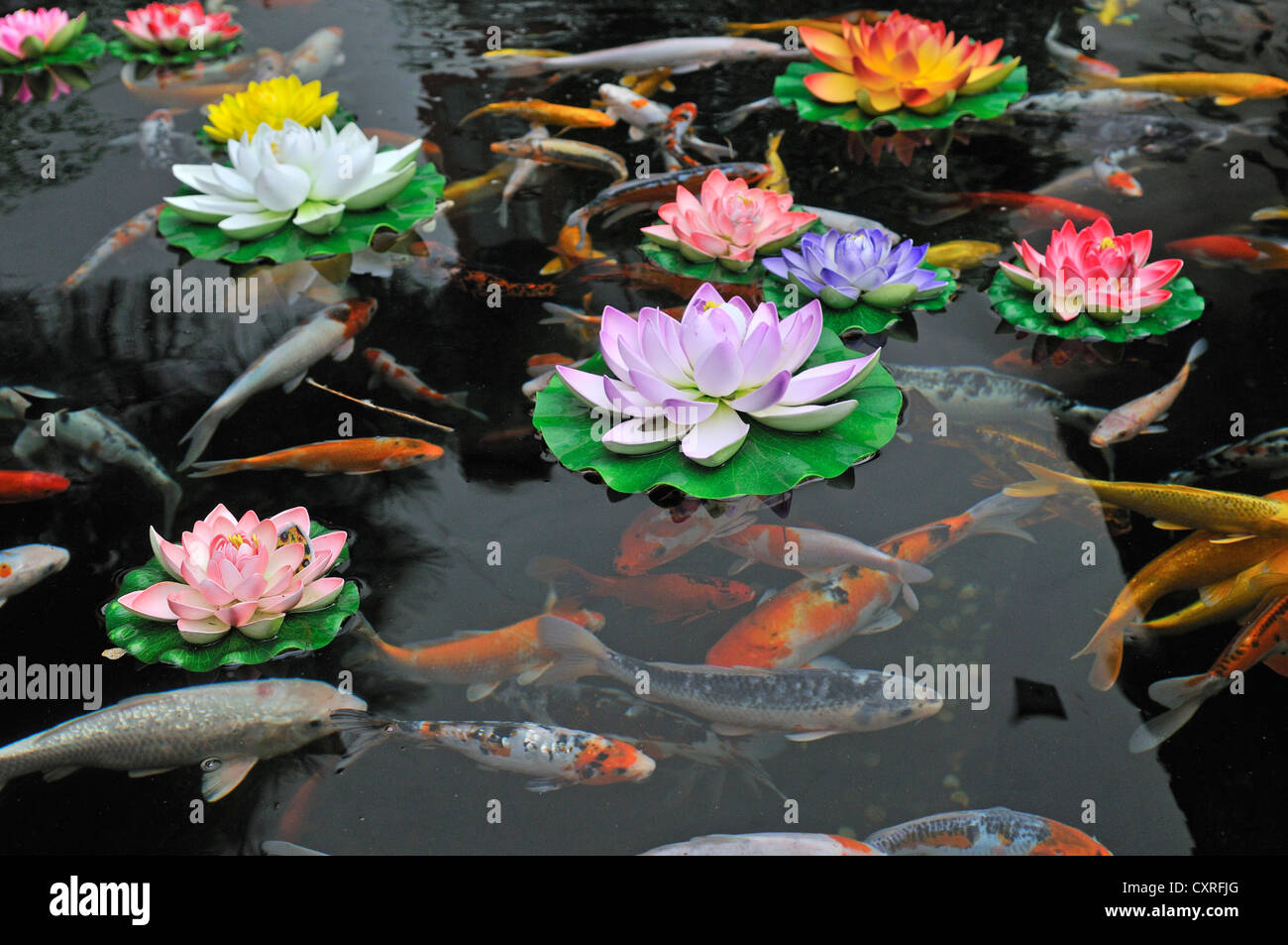 Koi pond at the jade buddha temple shanghai china asia for Chinese koi pond