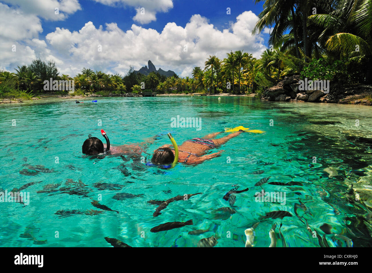 Snorkellers st regis bora bora resort bora bora for What to buy in bora bora