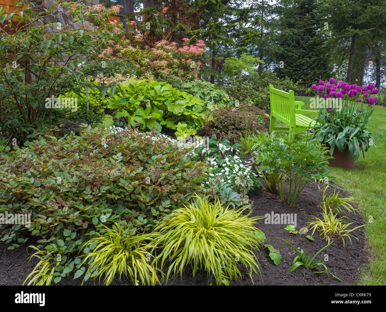 perennial garden featuring astillbe japanese forest grass stock