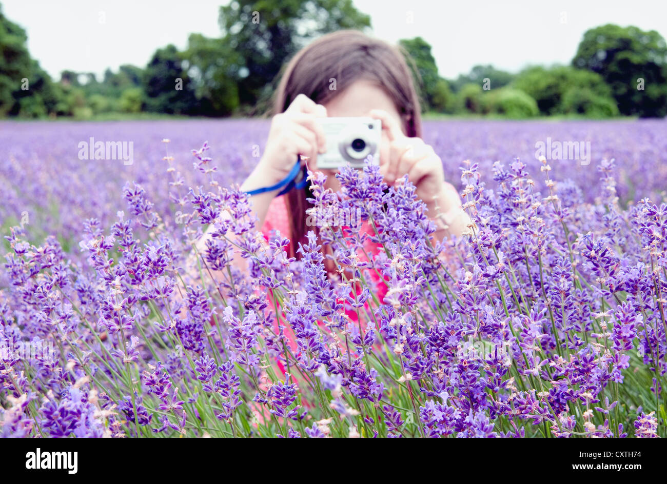 taking pictures of flowers stock photo royalty free image