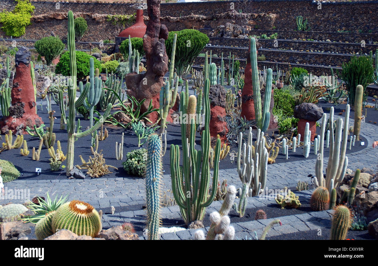 El jard n de cactus the cactus garden tenerife this was one of the stock photo royalty free - Jardin de cactus ...