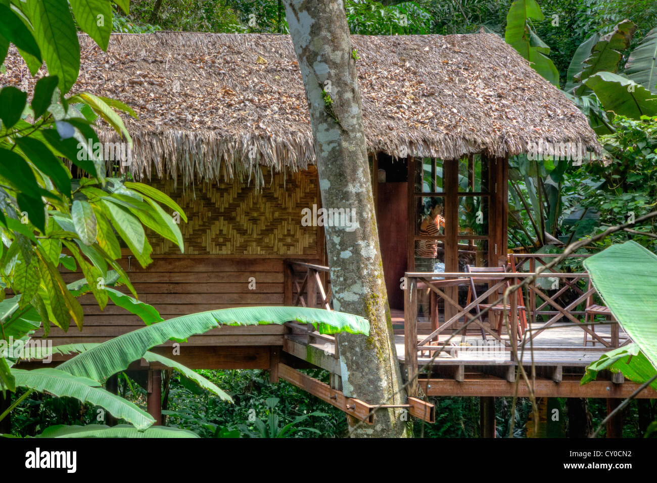 TREE HOUSES are the specialty of OUR JUNGLE HOUSE KHAO SOK ...