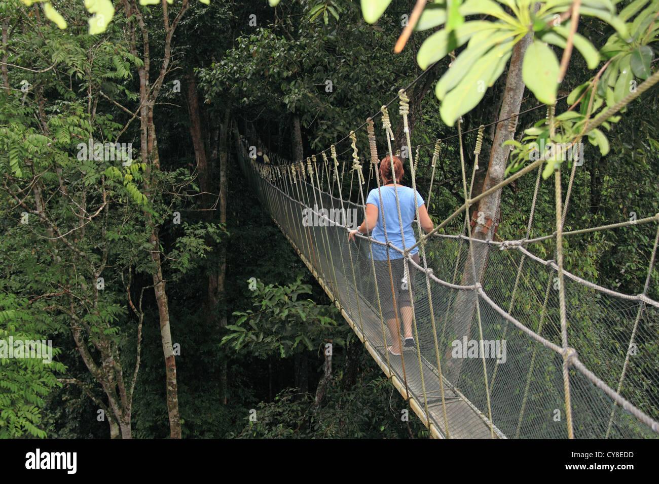 Rainforest canopy walkway Poring Hot Springs Kinabalu Park Sabah Borneo Malaysia Southeast Asia & Rainforest canopy walkway Poring Hot Springs Kinabalu Park ...