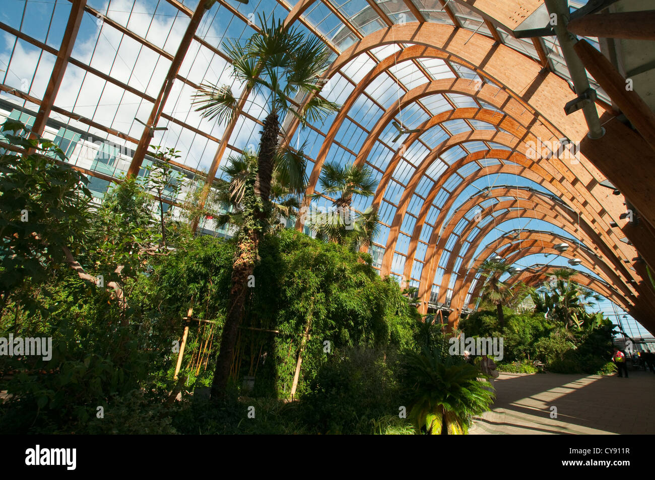 the winter gardens in sheffield city centre south yorkshire uk