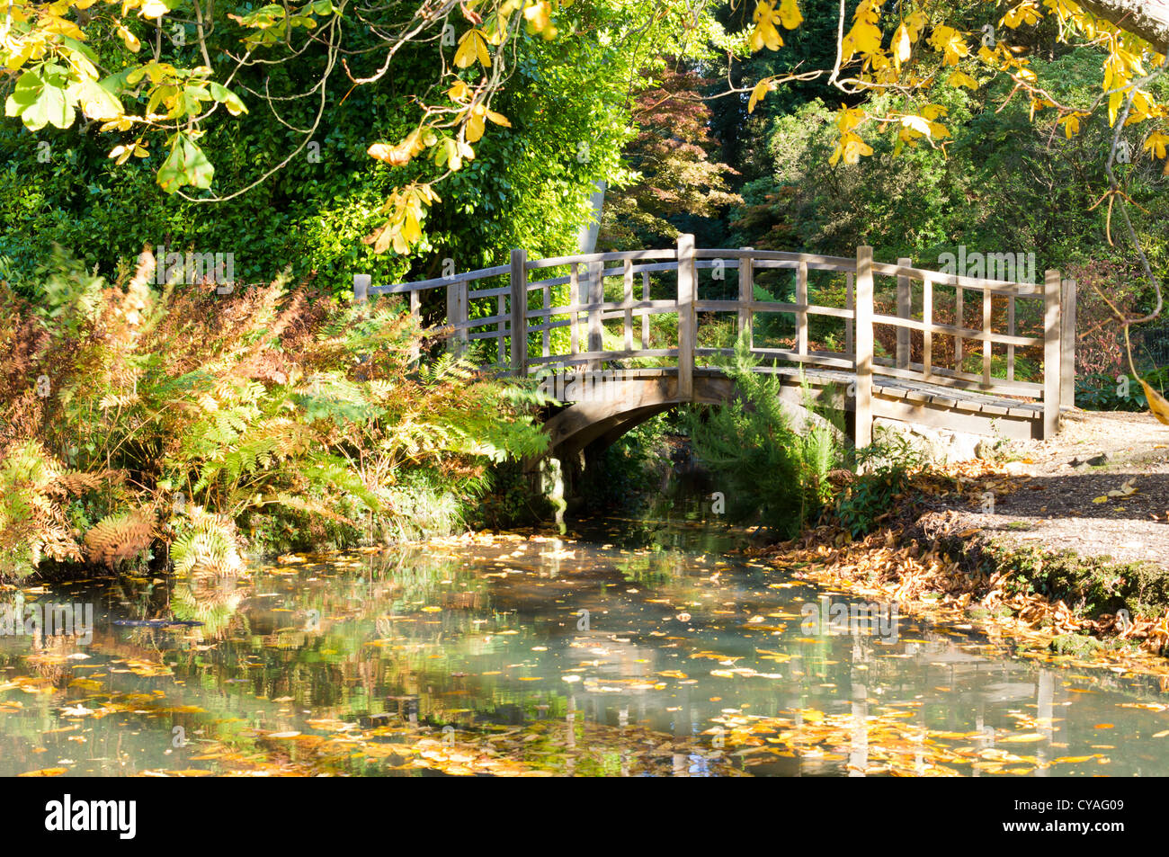 Exbury Gardens in Autumn on a sunny afternoon with colorful trees ...