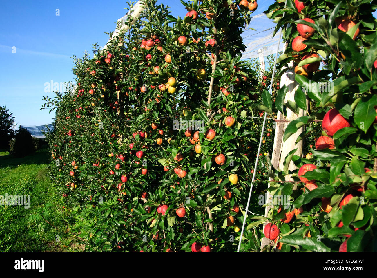 how to grow an orchard
