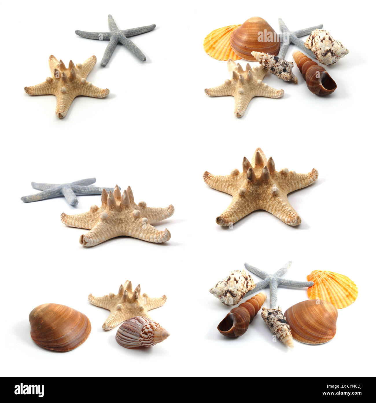 ocean creatures like seashells and starfish collection stock photo
