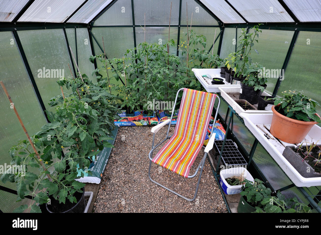 interior of small greenhouse with growing tomato plants seed