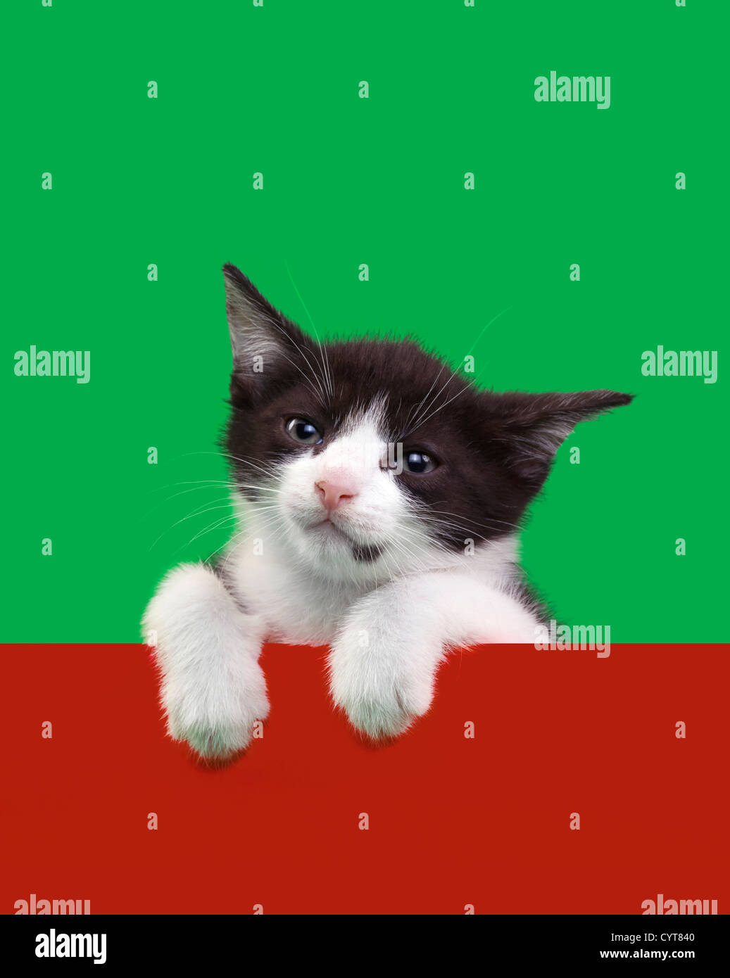Black and White Domestic Cat Cutout on Green and Red Background ...