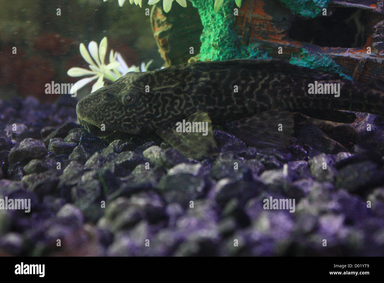 Freshwater Aquarium Fish In Dubai - Freshwater fish aquarium fish tropical fish pictures of fish fish tanks