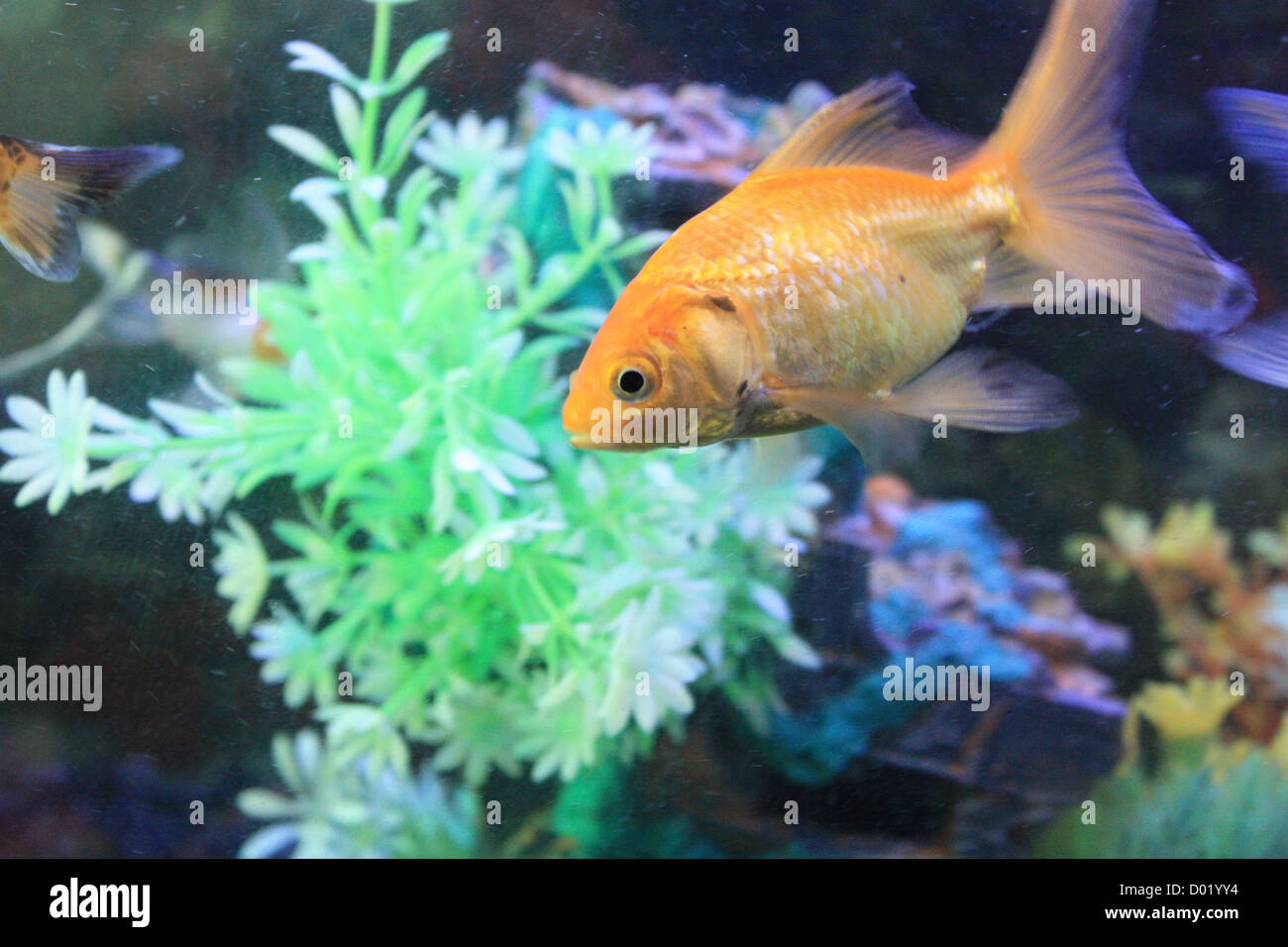 Freshwater aquarium fish store near me - Freshwater Fish Aquarium Fish Tropical Fish Pictures Of Fish Fish Tanks Fish For Sale All About Fish Salt Water Fish Che