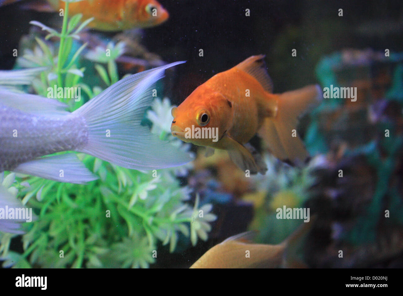Fish aquarium tanks for sale - Freshwater Fish Aquarium Fish Tropical Fish Pictures Of Fish Fish Tanks Fish For Sale All About Fish Salt Water Fish Che