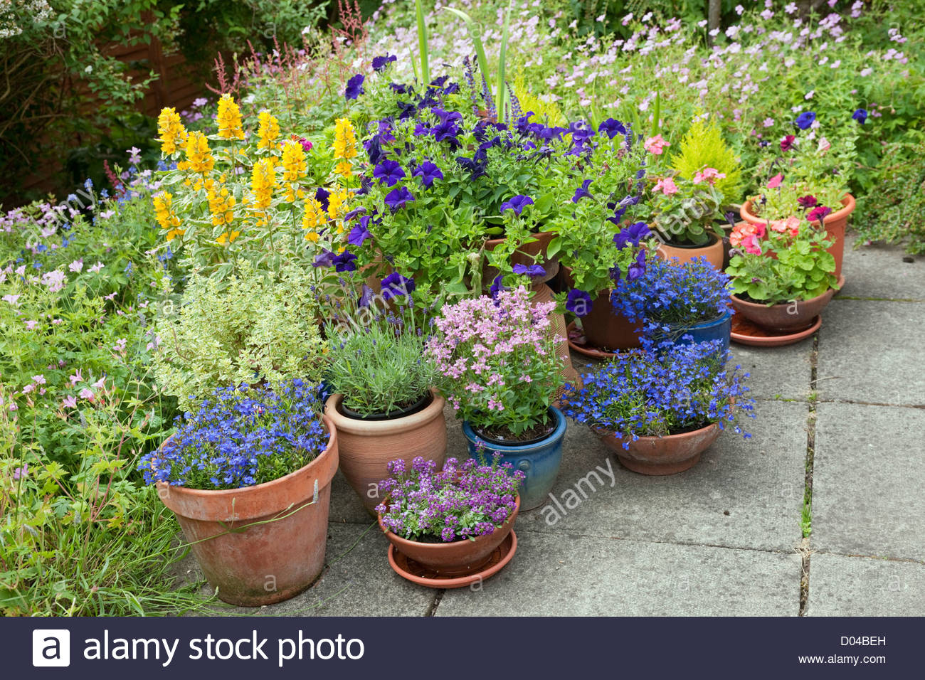 patio with summer flowering perennial plants in border and, Beautiful flower