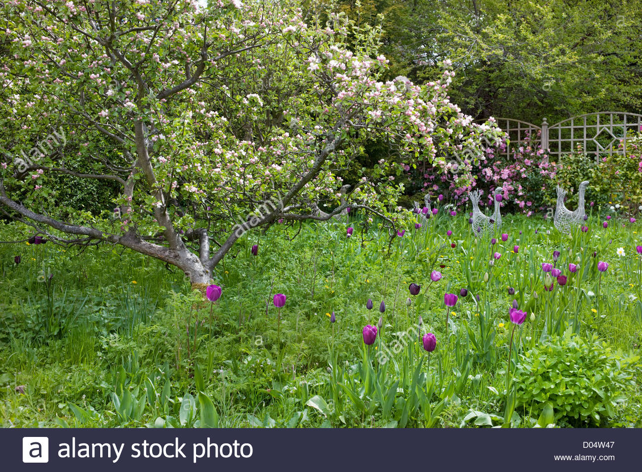Elegant Orchard Garden With Apple Trees In Blossom And Flowering Bulbs.  U0027Roscullenu0027, Edinburgh, Scotland