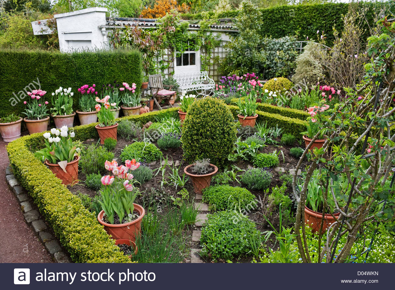 potager garden with herbs and tulips in containers 39 roscullen 39 stock photo royalty free image. Black Bedroom Furniture Sets. Home Design Ideas