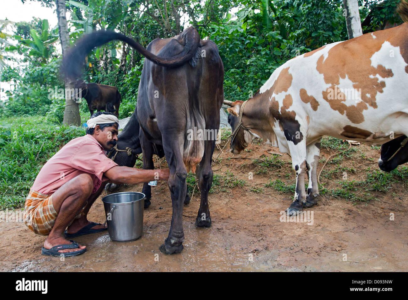 free videos of kerala cow girls