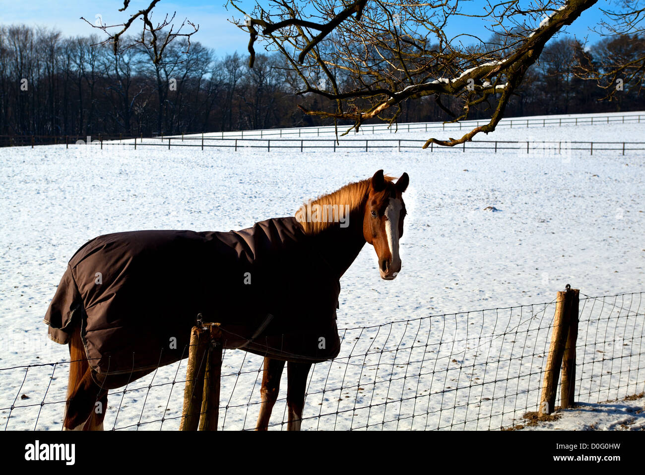 how to keep a horse warm in winter