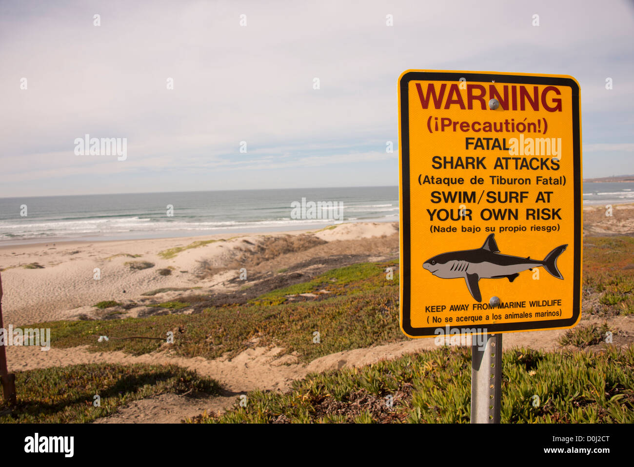 bi lingual shark attack warning sign posted on surf beach at vandenberg air force base in lompoc on the pacific ocean california