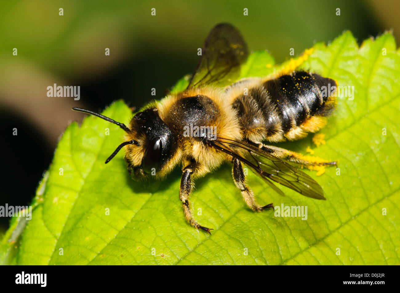 leaf cutter bees By attracting mason and leafcutter bees to your yard or garden, you includes tips on where to put mason bee, leaf-cutter bee house location.
