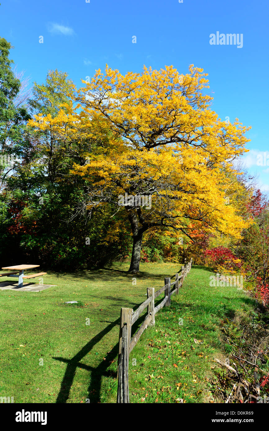 Fenced shoreline with colorful fall leaves autumn trees Michigan ...