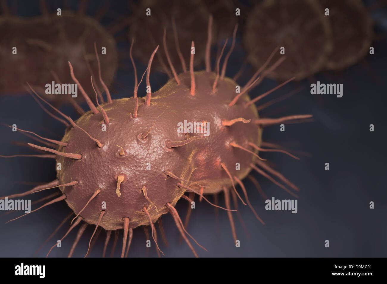 smazka-vlagalisha-pod-mikroskopom