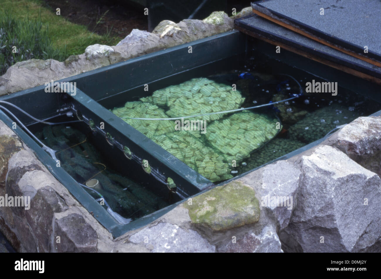 Filter chambers for raised koi pond stock photo royalty for Koi fish pond filter