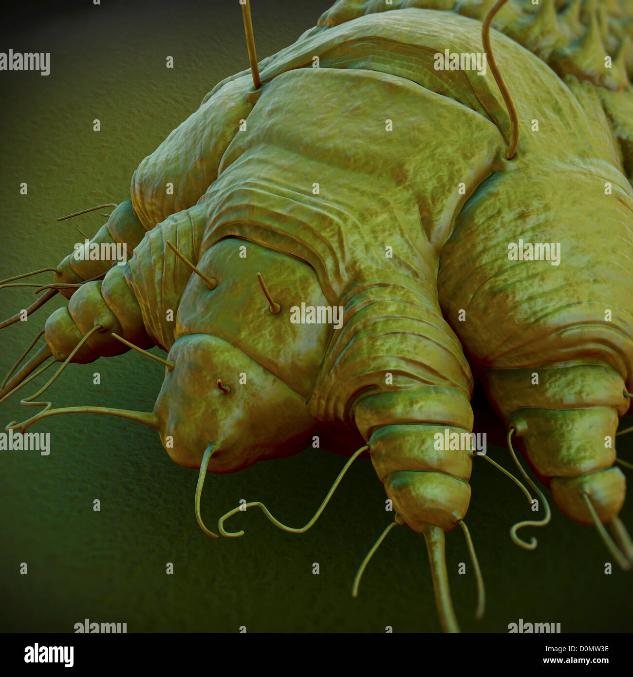 how to kill scabies mites