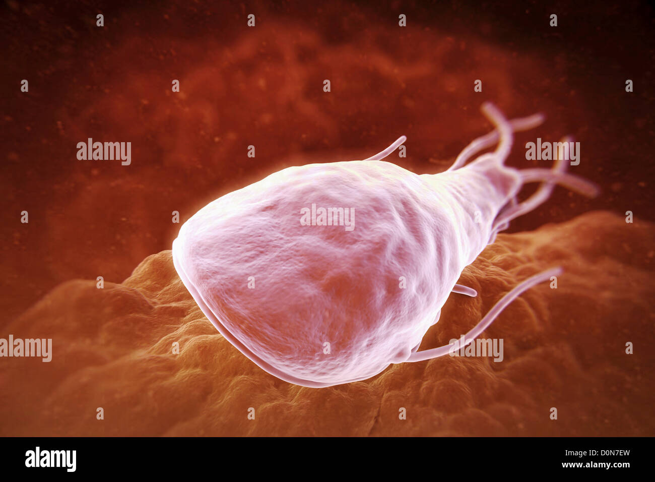 a protozoan parasite Start studying protozoa learn vocabulary, terms, and more with flashcards, games, and other study tools  definitive host is the one in which the parasite.