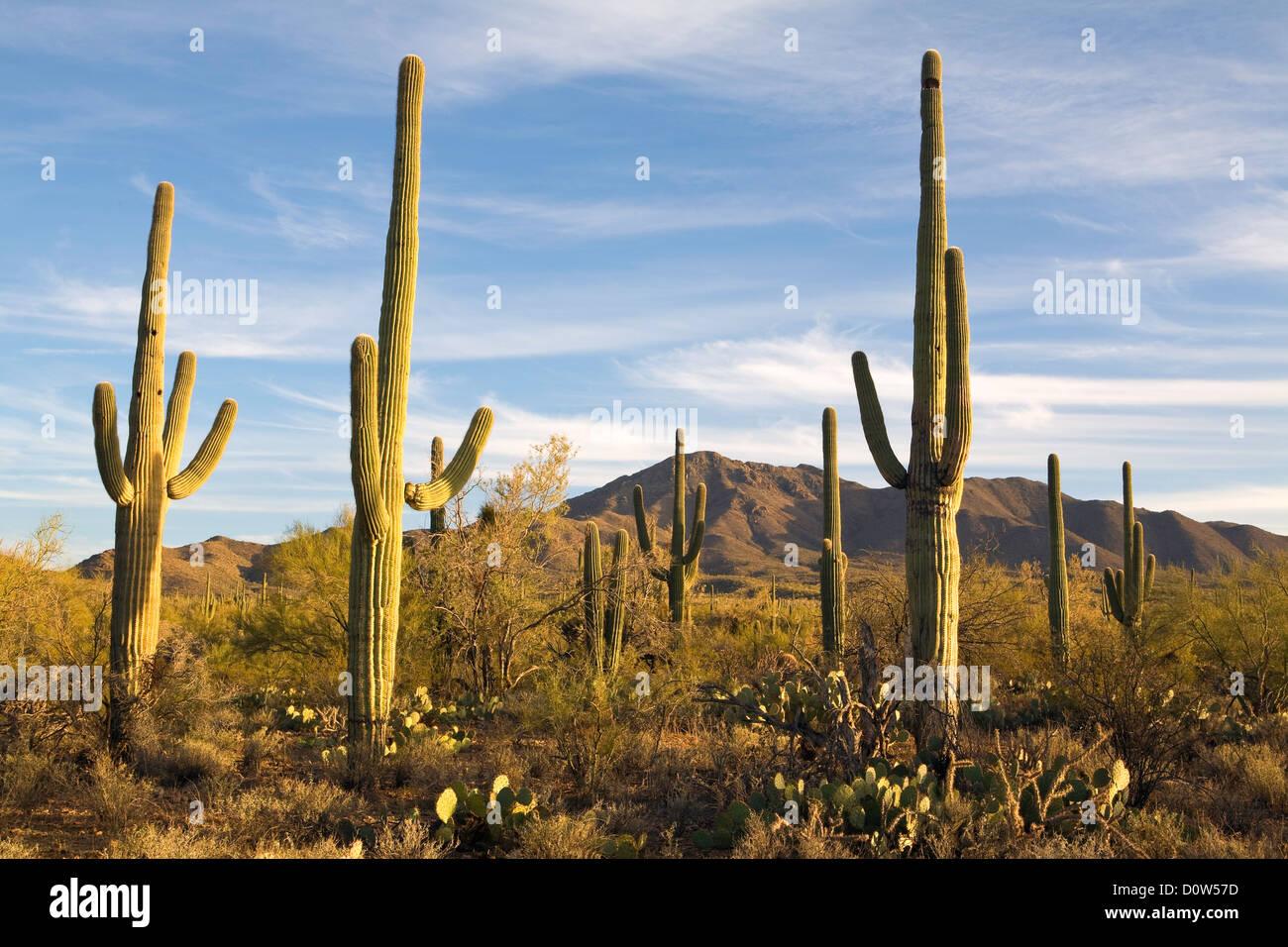 arizona kaktus pflanzen f r nassen boden. Black Bedroom Furniture Sets. Home Design Ideas