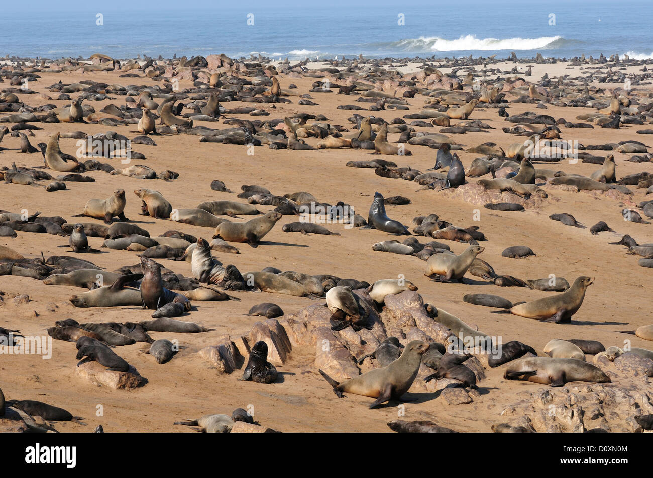 Namibia Skeleton Coast Tours