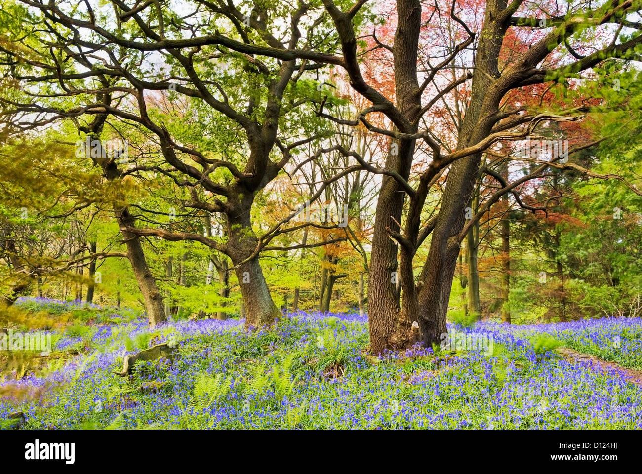 middleton woods ilkley yorkshire stock photos u0026 middleton woods
