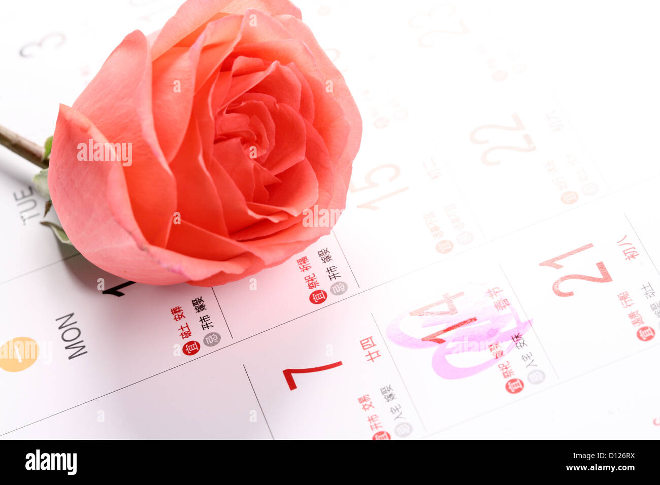 Calendar Rose Day : Rose for valentine s day with calendar stock photo