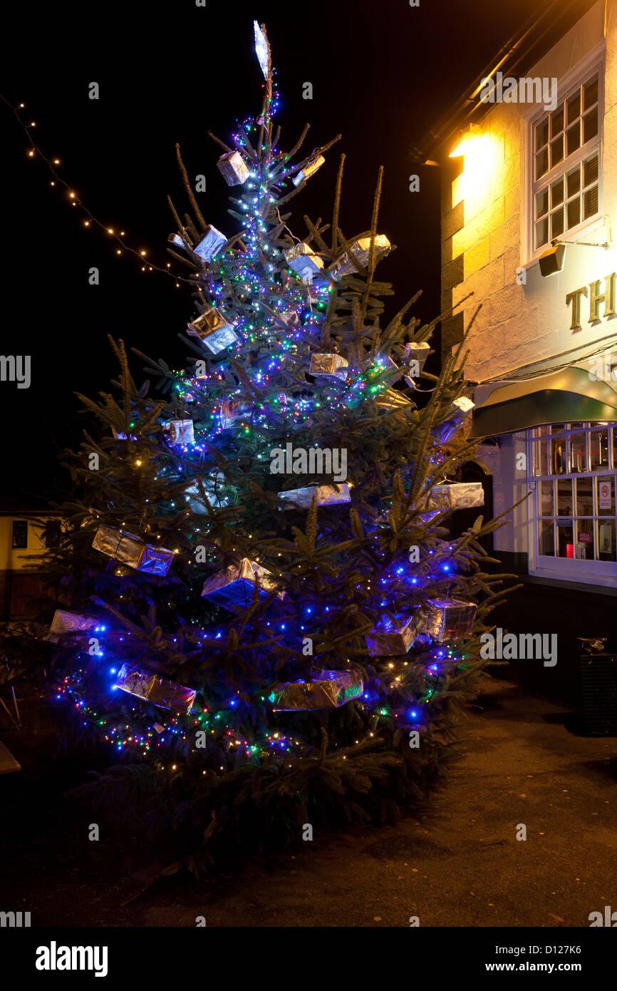 Christmas Trees York