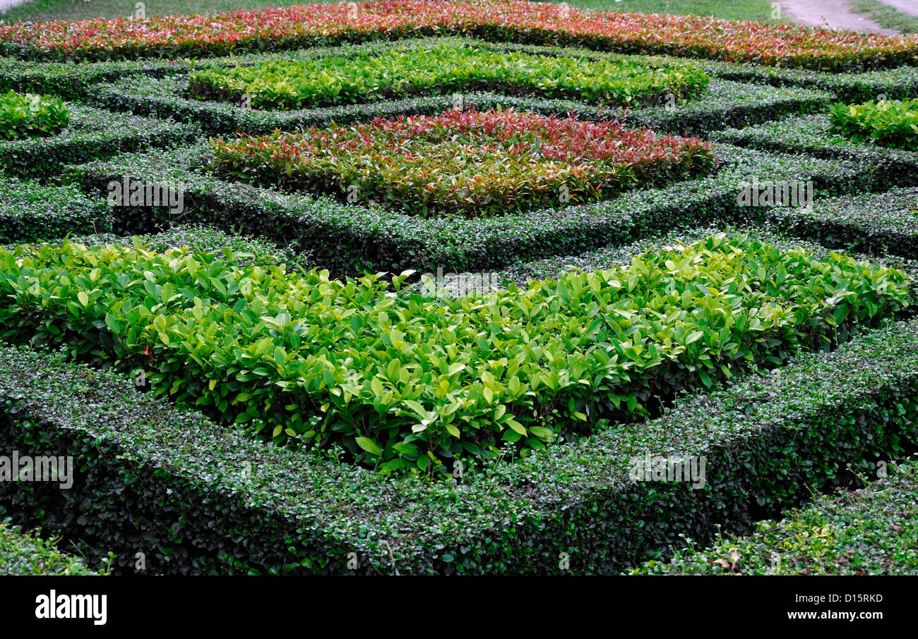 Clipped Clip Trim Trimmed Cut Box Hedge Hedging Pieris Green Red Garden  Design Geometric Shape Square Feature