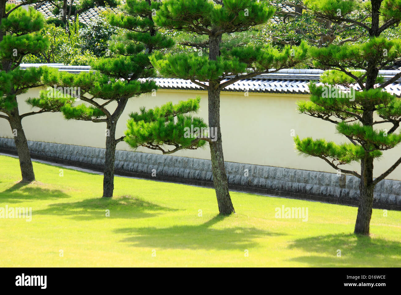 Garden With Pine Trees And Japanese Traditional Roofed Stone Wall, Nara  Prefecture