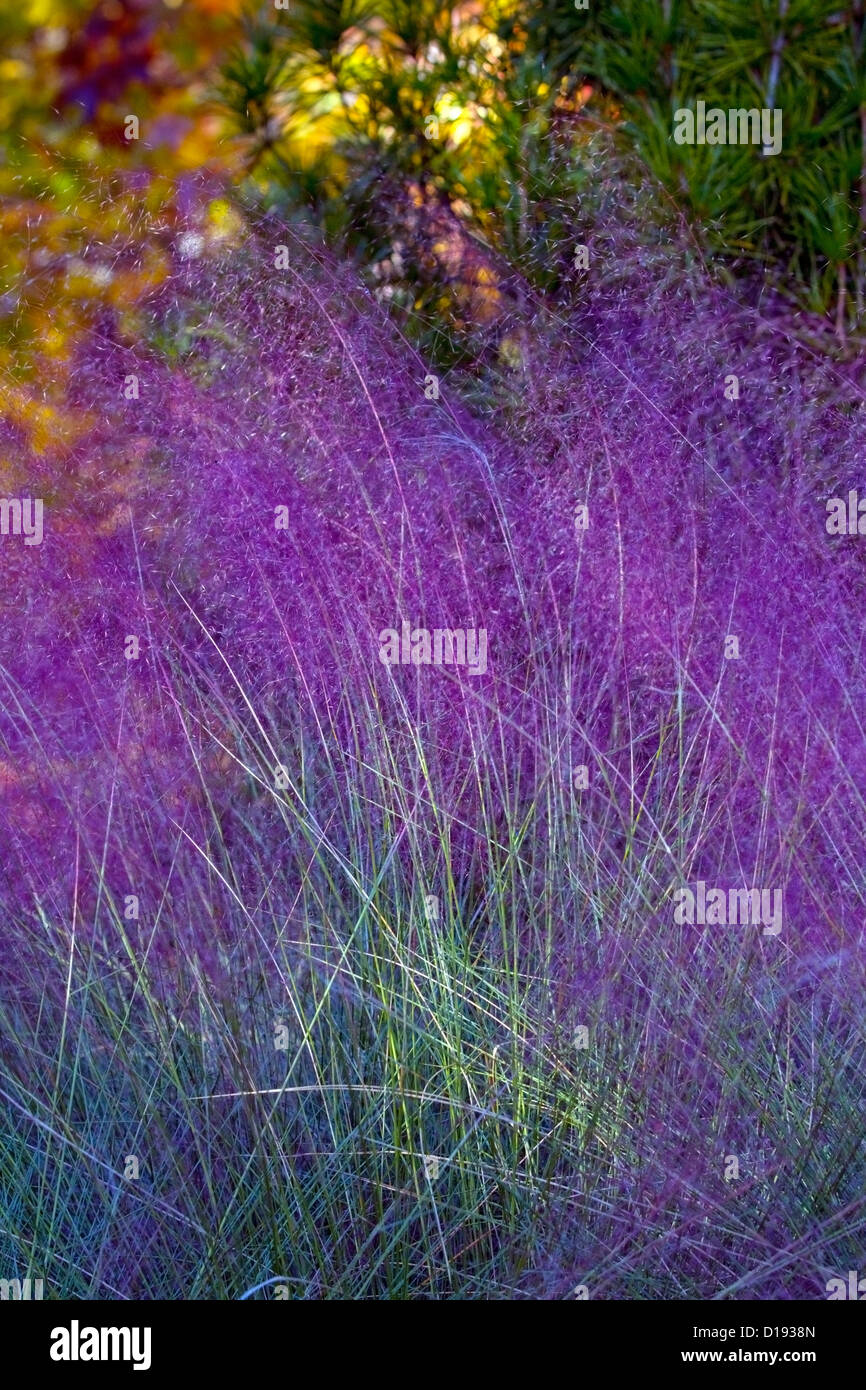 colorful grasses at the arboretum nc stock photo royalty