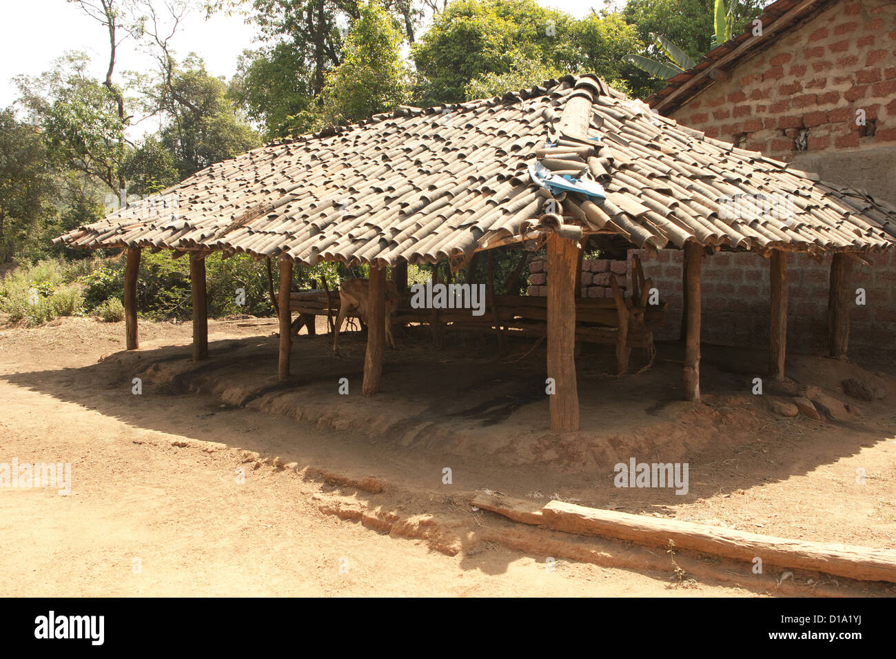 Cattle shed in kuveshi village in karnataka india stock image