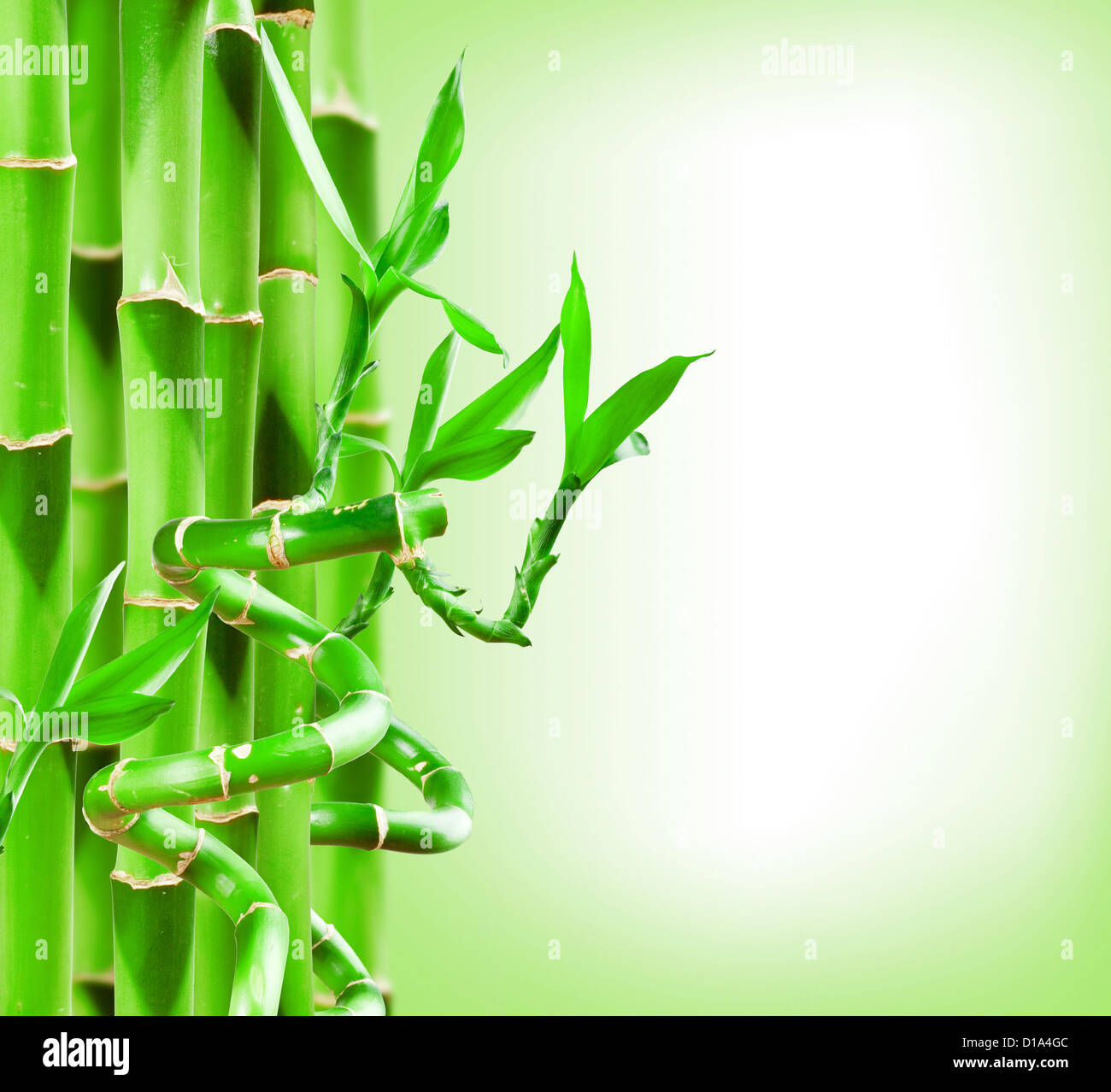 green bamboo border wwwpixsharkcom images galleries