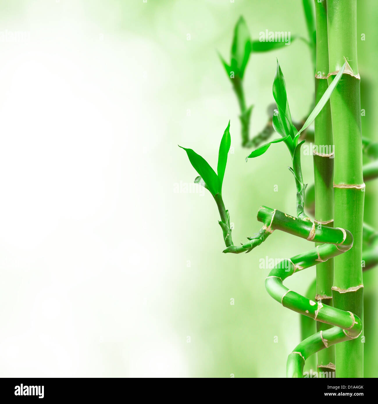 beautiful green bamboo border for you design stock photo