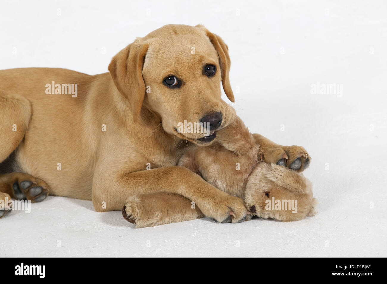 Puppy Sleeping With Teddy Bear | www.pixshark.com - Images ...