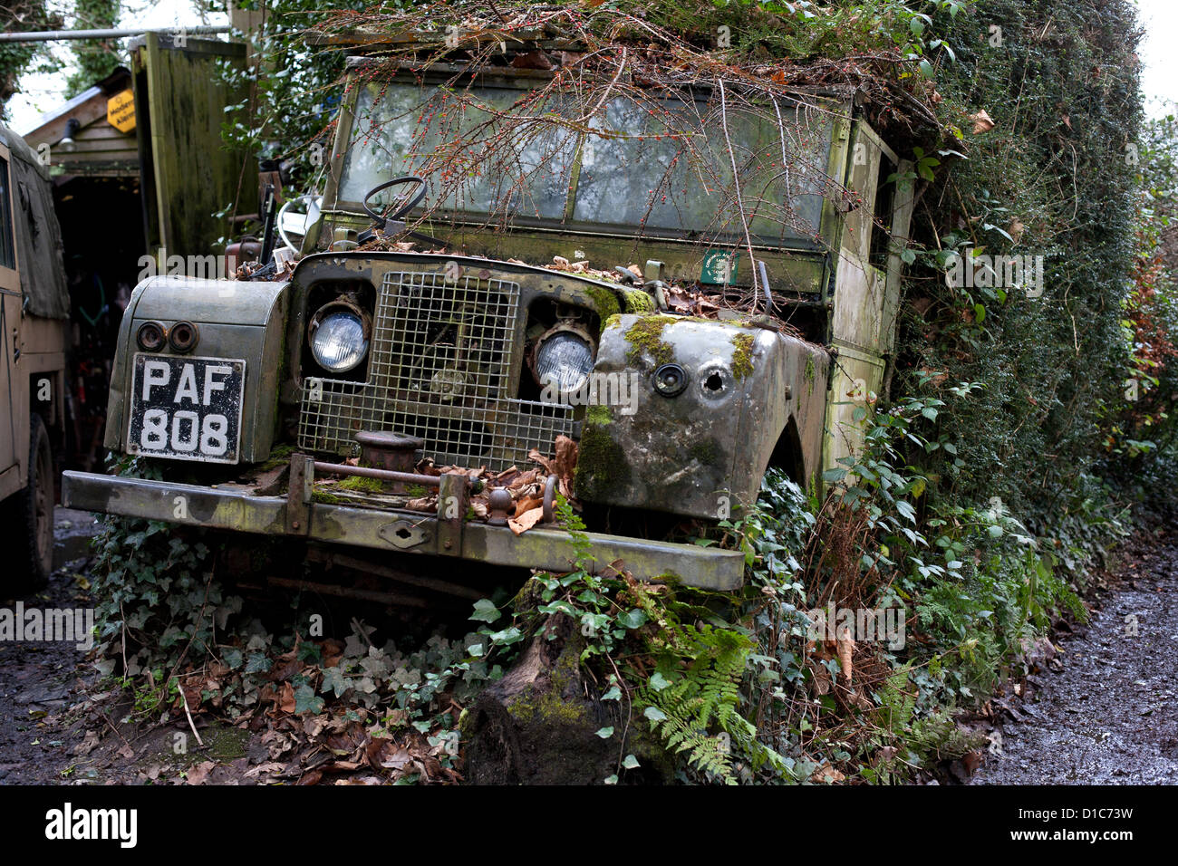 An Old British Military Land Rover Rots In A Hedgerow By