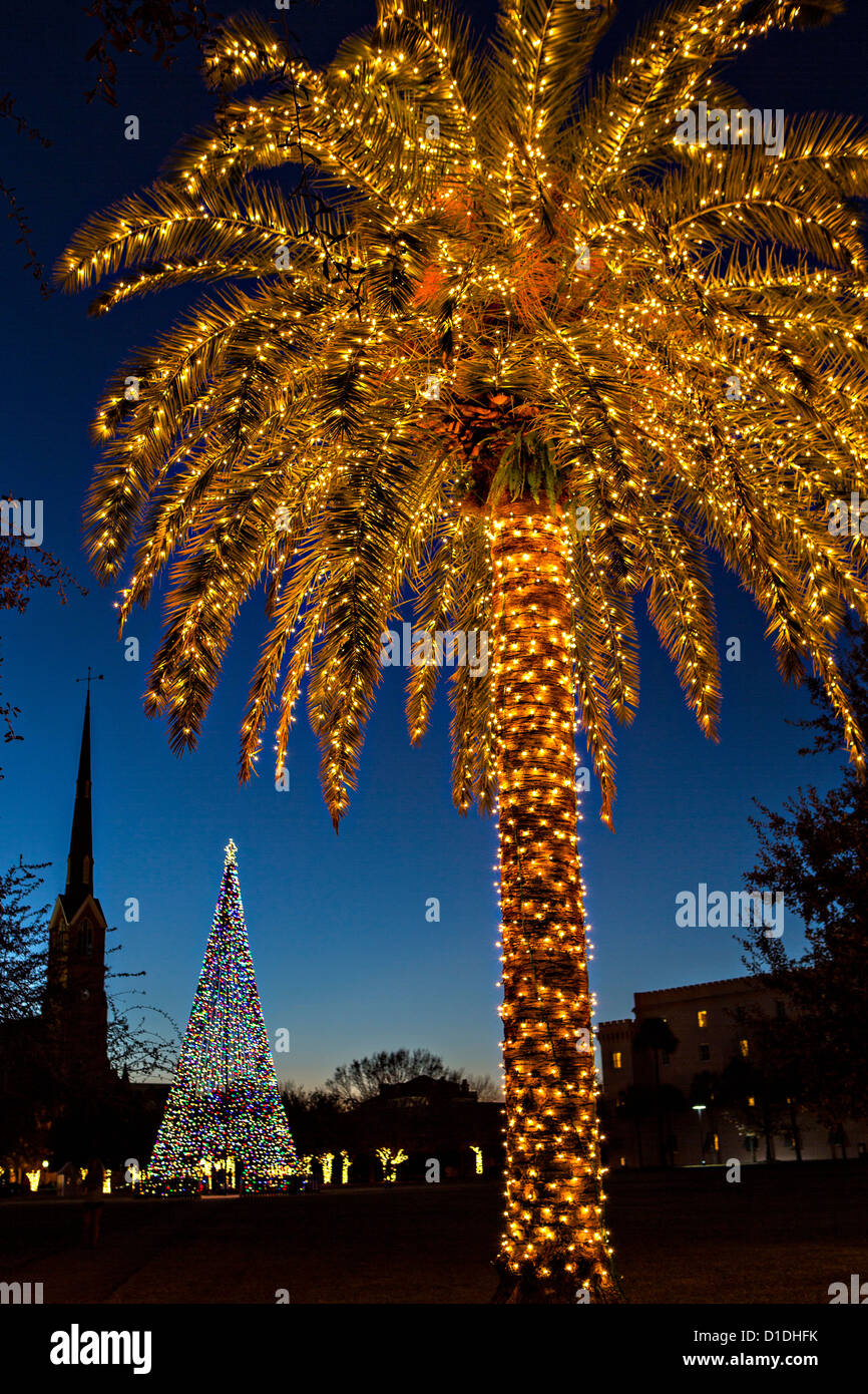 Palm Trees With Christmas Lights Pictures Part - 35: Palm Tree Covered In Fairy Lights For Christmas In Historic Marion Square  In Charleston, South Carolina.